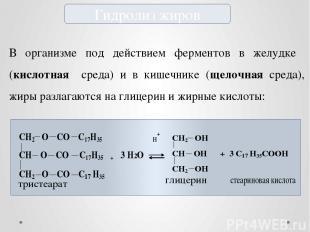 Гидролиз жиров В организме под действием ферментов в желудке (кислотная среда) и