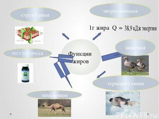 Функции жиров энергетическая 1г жира Q  РЕГУЛЯТОРНАЯ терморегуляция запасающая