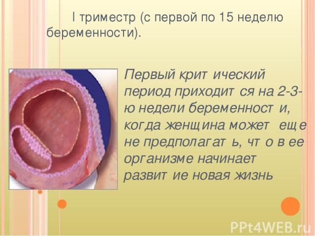 I триместр (с первой по 15 неделю беременности). Первый критический период приходится на 2-3-ю недели беременности, когда женщина может еще не предполагать, что в ее организме начинает развитие новая жизнь
