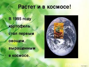 Растет и в космосе! В 1995 году картофель стал первым овощем, выращенным в космо
