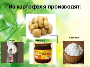 Из картофеля производят: Крахмал Спирт Патоку