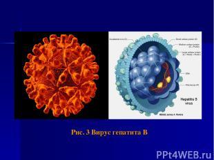 Рис. 3 Вирус гепатита В