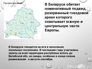 Распространение: В Беларуси обитает номинативный подвид, разорванный гнездовой а