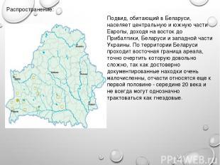 Распространение: Подвид, обитающий в Беларуси, населяет центральную и южную част