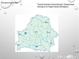 Распространение: Транспалеарктический вид. Единичные находки на территории Белар