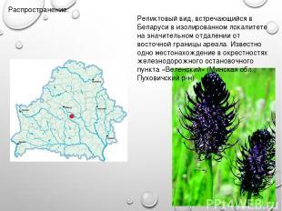 Распространение: Реликтовый вид, встречающийся в Беларуси в изолированном локали
