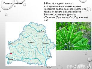 Распространение: В Беларуси единственное изолированное местонахождение находится