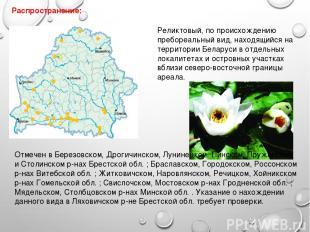 Распространение: Отмечен в Березовском, Дрогичинском, Лунинецком, Пинском, Пружа
