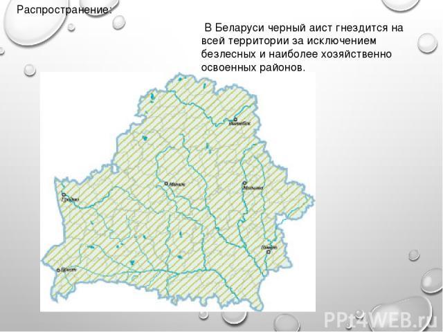 Распространение: В Беларуси черный аист гнездится на всей территории за исключением безлесных и наиболее хозяйственно освоенных районов.