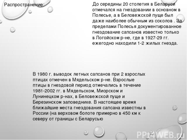 Распространение: До середины 20 столетия в Беларуси отмечался на гнездовании в основном в Полесье, а в Беловежской пуще был даже наиболее обычным из соколов . За пределами Полесья документированное гнездование сапсанов известно только в Логойском р-…