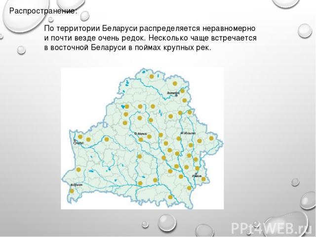 Распространение: По территории Беларуси распределяется неравномерно и почти везде очень редок. Несколько чаще встречается в восточной Беларуси в поймах крупных рек.