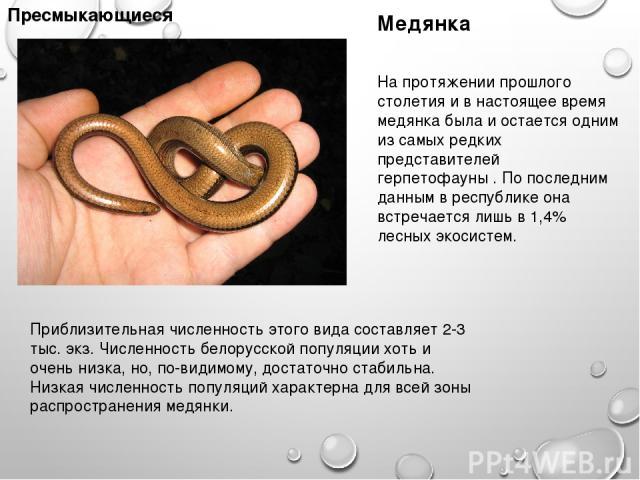 Пресмыкающиеся Медянка Приблизительная численность этого вида составляет 2-3 тыс. экз. Численность белорусской популяции хоть и очень низка, но, по-видимому, достаточно стабильна. Низкая численность популяций характерна для всей зоны распространения…
