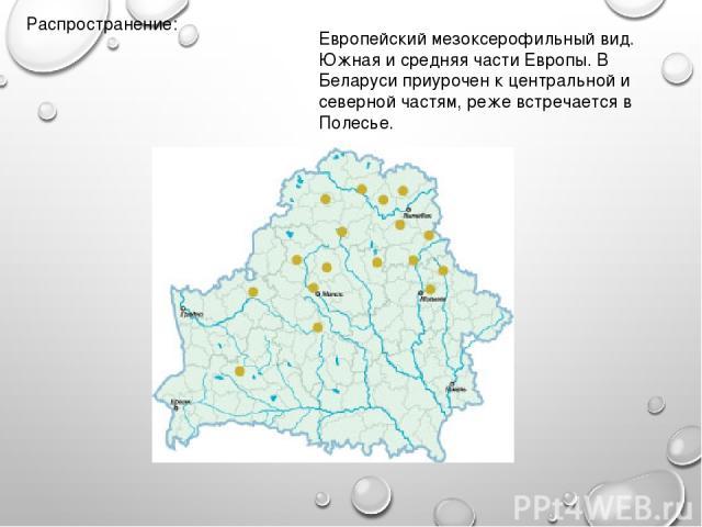 Распространение: Европейский мезоксерофильный вид. Южная и средняя части Европы. В Беларуси приурочен к центральной и северной частям, реже встречается в Полесье.