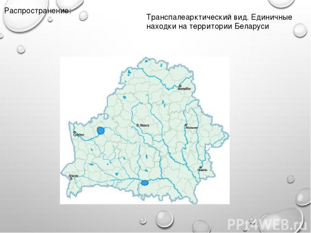 Распространение: Транспалеарктический вид. Единичные находки на территории Беларуси