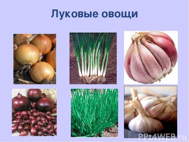 Луковые овощи