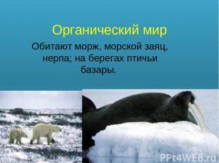 Органический мир Обитают морж, морской заяц, нерпа; на берегах птичьи базары.