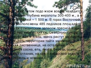 В лесу даже летом подо мхом всегда находится лёд. Средняя глубина мерзлоты 300-4
