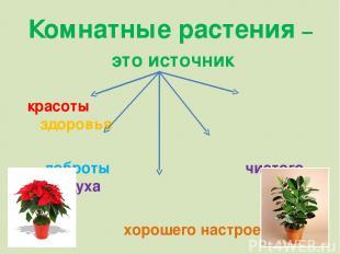 Комнатные растения – это источник красоты здоровья доброты чистого воздуха хорош