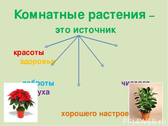 Комнатные растения – это источник красоты здоровья доброты чистого воздуха хорошего настроения