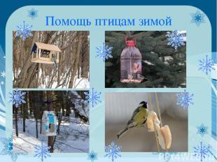 Помощь птицам зимой