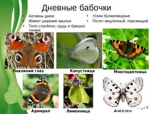 Дневные бабочки Активны днем Имеют широкие крылья Тело стройное, грудь и брюшко