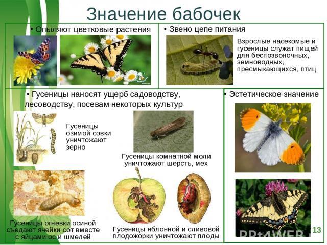 Значение бабочек Free Powerpoint Templates Page *