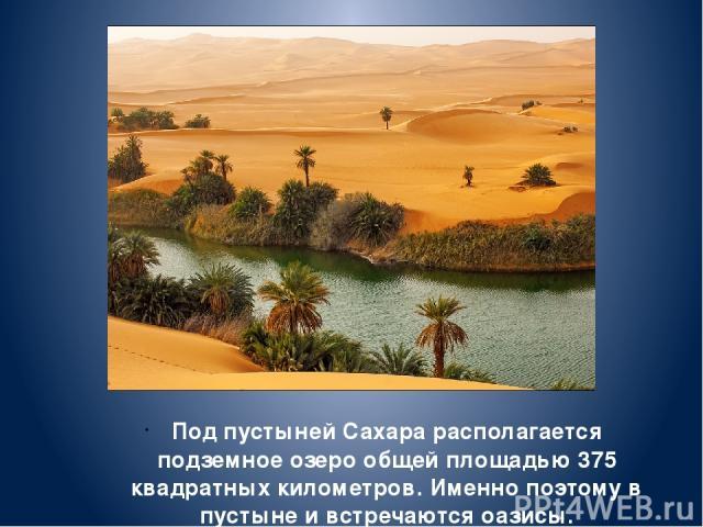 Под пустыней Сахара располагается подземное озеро общей площадью 375 квадратных километров. Именно поэтому в пустыне и встречаются оазисы.
