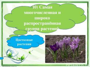 10) Самая многочисленная и широко распространённая группа растений Цветковые рас