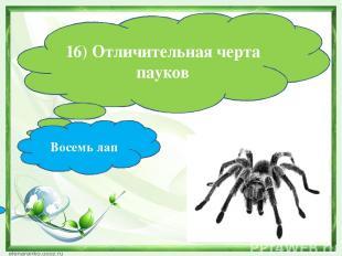 16) Отличительная черта пауков Восемь лап