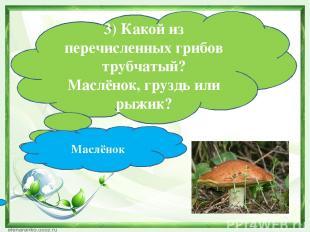 3) Какой из перечисленных грибов трубчатый? Маслёнок, груздь или рыжик? Маслёнок