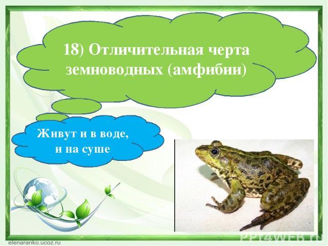 18) Отличительная черта земноводных (амфибии) Живут и в воде, и на суше
