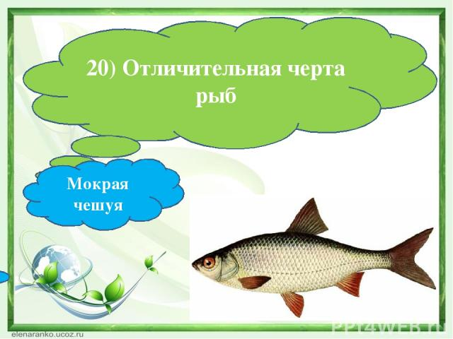 20) Отличительная черта рыб Мокрая чешуя