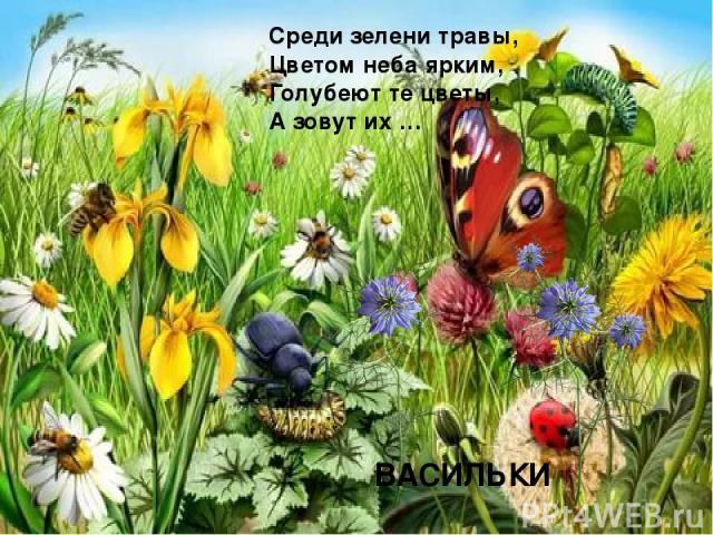 Среди зелени травы, Цветом неба ярким, Голубеют те цветы, А зовут их … ВАСИЛЬКИ