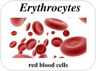 red blood cells Erythrocytes