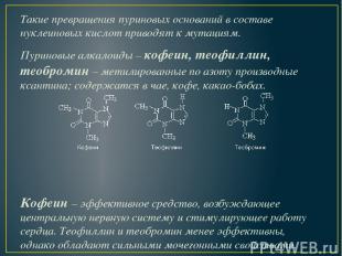 Такие превращения пуриновых оснований в составе нуклеиновых кислот приводят к му