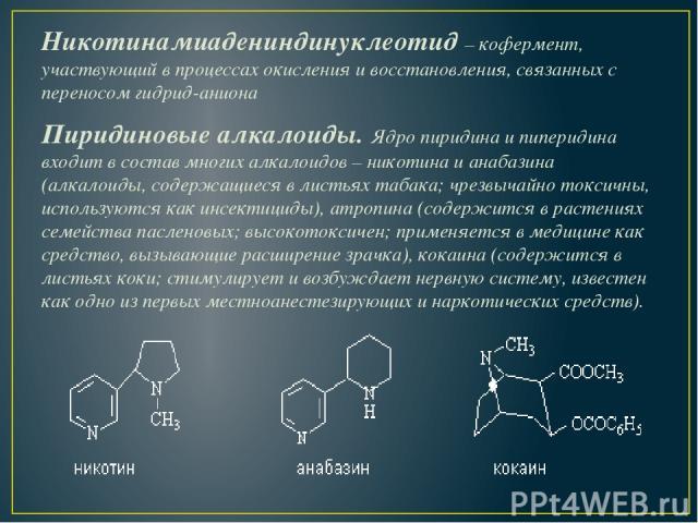 Никотинамиадениндинуклеотид–кофермент, участвующий в процессах окисления и восстановления, связанных с переносом гидрид-аниона Пиридиновые алкалоиды. Ядро пиридина и пиперидина входит в состав многих алкалоидов – никотина и анабазина (алкалоиды, с…