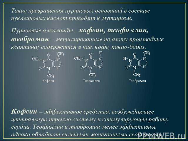 Такие превращения пуриновых оснований в составе нуклеиновых кислот приводят к мутациям. Пуриновые алкалоиды –кофеин, теофиллин, теобромин– метилированные по азоту производные ксантина; содержатся в чае, кофе, какао-бобах. Кофеин – эффективное сред…