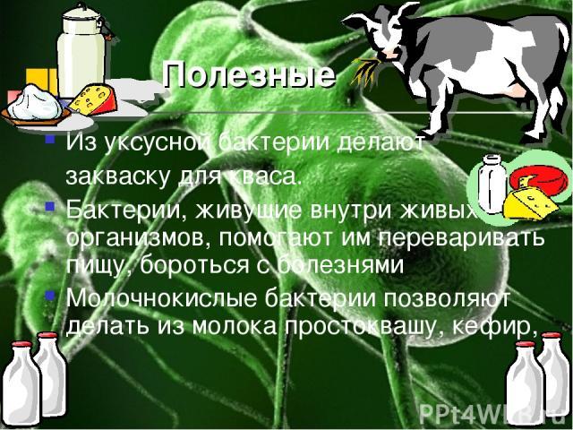 Полезные Из уксусной бактерии делают закваску для кваса. Бактерии, живущие внутри живых организмов, помогают им переваривать пищу, бороться с болезнями Молочнокислые бактерии позволяют делать из молока простоквашу, кефир, --сметану, сыр и др.