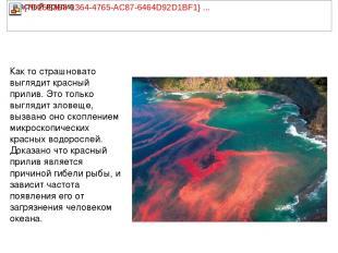 Как то страшновато выглядит красный прилив. Это только выглядит зловеще, вызвано
