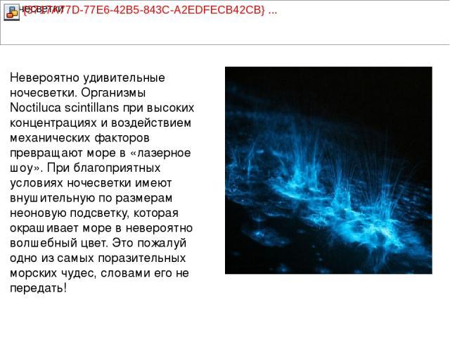 Невероятно удивительные ночесветки. Организмы Noctiluca scintillans при высоких концентрациях и воздействием механических факторов превращают море в «лазерное шоу». При благоприятных условиях ночесветки имеют внушительную по размерам неоновую подсве…