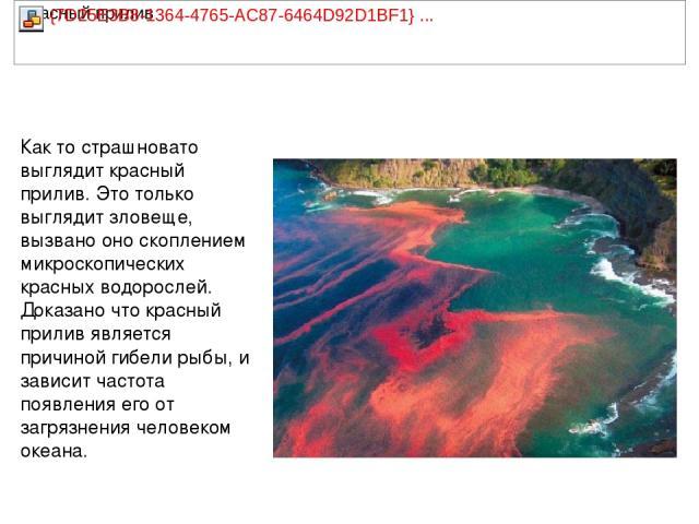 Как то страшновато выглядит красный прилив. Это только выглядит зловеще, вызвано оно скоплением микроскопических красных водорослей. Доказано что красный прилив является причиной гибели рыбы, и зависит частота появления его от загрязнения человеком …
