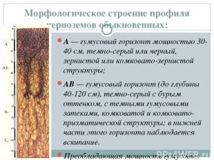 Морфологическое строение профиля черноземов обыкновенных: А— гумусовый горизонт