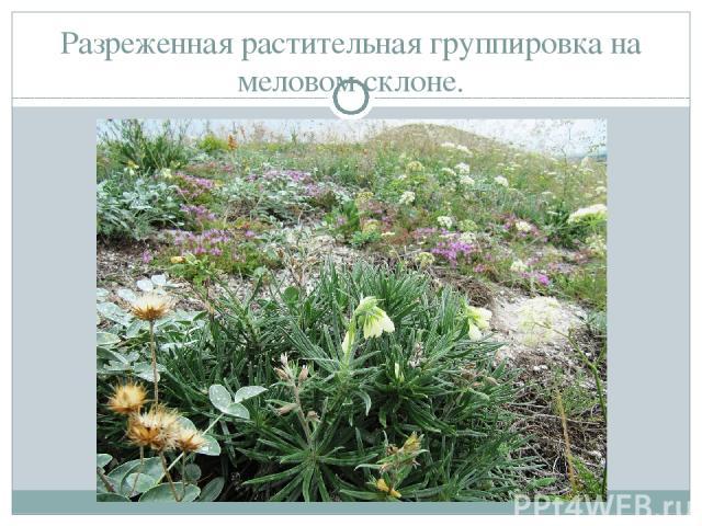 Разреженная растительная группировка на меловом склоне.