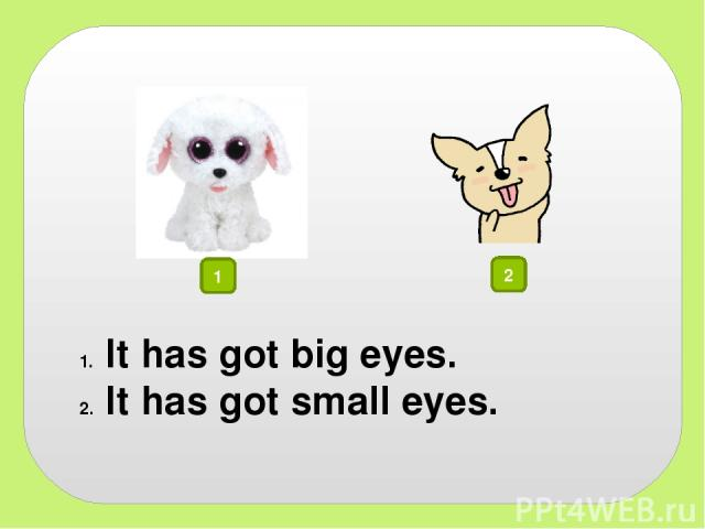 1 2 It has got big eyes. It has got small eyes.