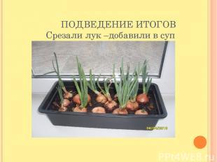 ПОДВЕДЕНИЕ ИТОГОВ Срезали лук –добавили в суп