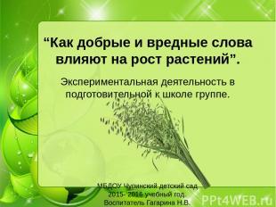 """""""Как добрые и вредные слова влияют на рост растений"""". Экспериментальная деятельн"""