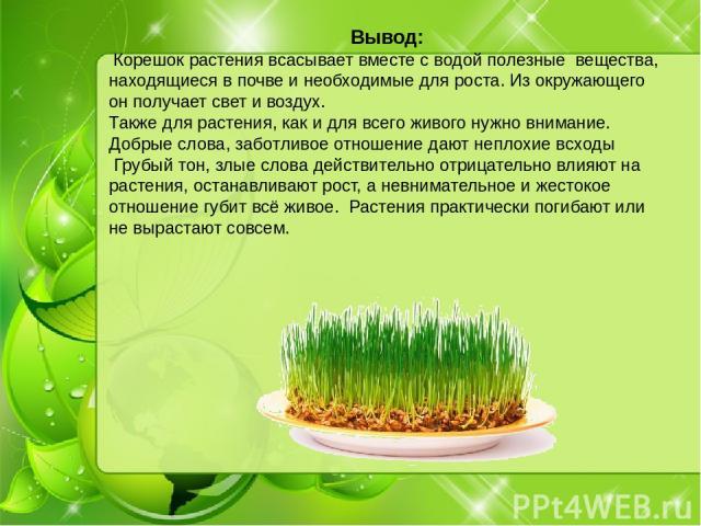 Вывод: Корешок растения всасывает вместе с водой полезные вещества, находящиеся в почве и необходимые для роста. Из окружающего он получает свет и воздух. Также для растения, как и для всего живого нужно внимание. Добрые слова, заботливое отношение …