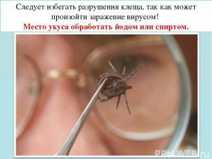 Следует избегать разрушения клеща, так как может произойти заражение вирусом! Ме