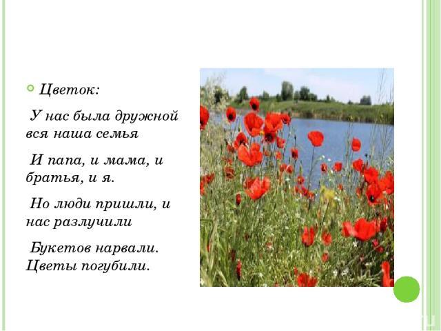 Цветок: У нас была дружной вся наша семья И папа, и мама, и братья, и я. Но люди пришли, и нас разлучили Букетов нарвали. Цветы погубили.