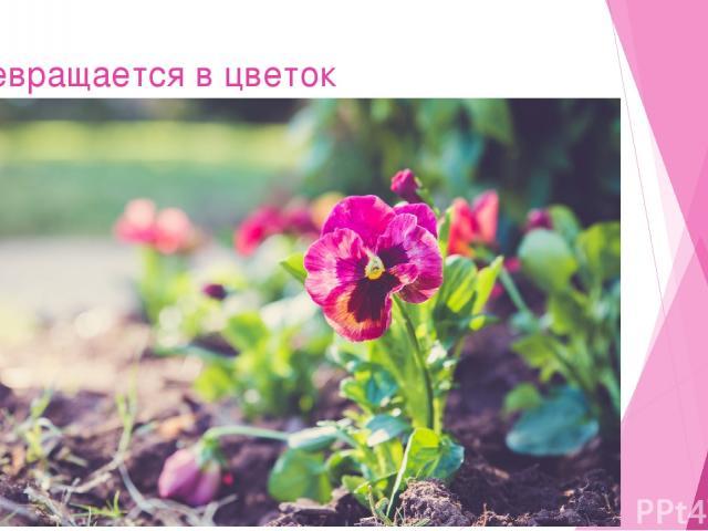Превращается в цветок